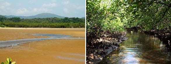 Tidal estuary and tidal tributary stream leading through the mangrove swamp. Iriomote Jima, Ryukyu, Japan.