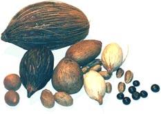 rare palm seeds